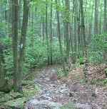 The Catoctin Trail -- Click for Larger