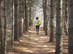 Running through the pines